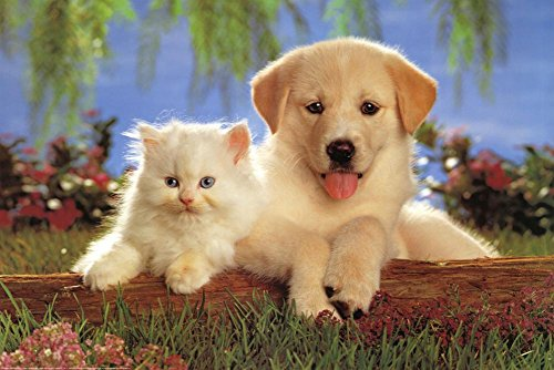 Real Pals Puppy Kitten Art Poster Print
