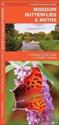 Read Online Missouri Butterflies & Moths: A Folding Pocket Guide to Familiar Species (A Pocket Naturalist Guide) ebook