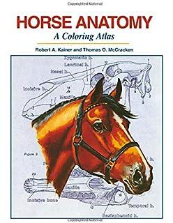 Amazon.com: Dog Anatomy: A Coloring Atlas (9781893441170): Robert ...