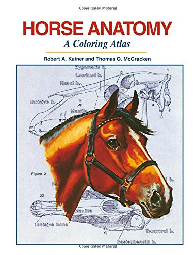 horse anatomy coloring book - 1