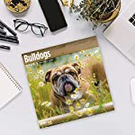 2020 Bulldogs Wall Calendar by Bright Day, 16 Month 12 x 12 Inch, Cute Dogs Puppy Animals English British 14