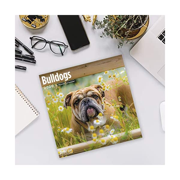 2020 Bulldogs Wall Calendar by Bright Day, 16 Month 12 x 12 Inch, Cute Dogs Puppy Animals English British 5
