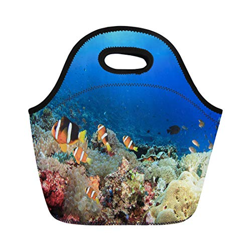 Semtomn Lunch Tote Bag Red Sea Anemones Clownfish Underwater on Coral Reef Blue Reusable Neoprene Insulated Thermal Outdoor Picnic Lunchbox for Men -