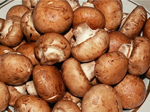 25 G Seeds Spores Royal Agaricus Bisporus Portobello Mushrooms Kit / Fungus