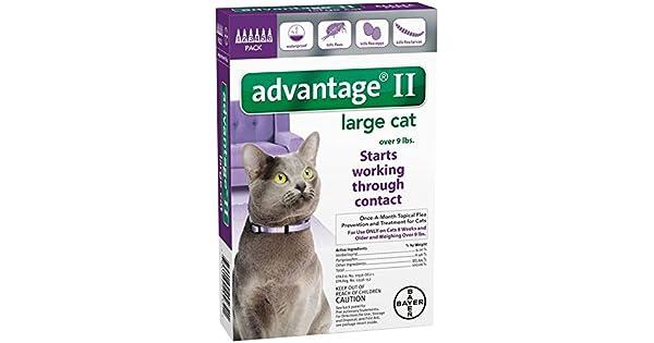 Amazon.com: Advantage II - Juego de 6 gatos grandes: Mascotas