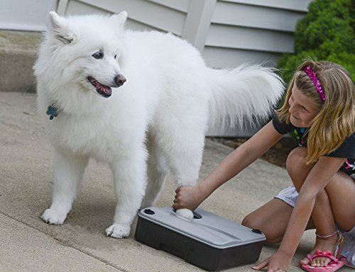 SKI Innovations Paw Boss Wash for Dogs