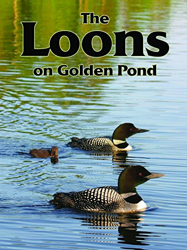 Beautiful Pond - The Loons On Golden Pond