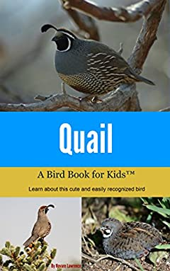 Quail: A Bird Book for Kids