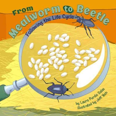 Mealworm Life Cycle (From Mealworm To Beetle Following The Life Cycle (Amazing Science) From Mealworm To Beetle)