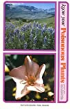 Know Your Poisonous Plants, Wilma R. James, 0879610123