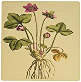 3dRose Print of Noble Liverwort Plant From 1700 - Mouse Pad, 8 by 8 inches (mp_204747_1)