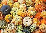 buy Higarden Cucurbita moschata, smallfruit bottle gourd, pumpkin seeds Ornamental-30 particles Seeds now, new 2018-2017 bestseller, review and Photo, best price $7.99