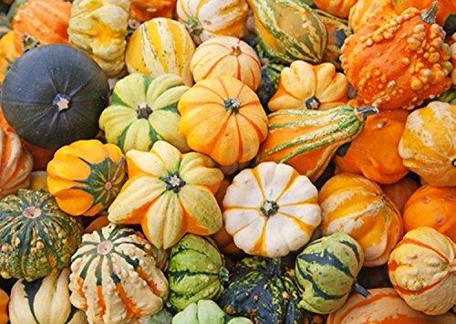 Higarden Cucurbita moschata, smallfruit bottle gourd, pumpkin seeds Ornamental-30 particles Seeds]()