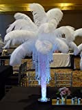 Sowder 5pcs Ostrich Feathers 16-18inch(40-45cm) for Home Wedding Decoration(white)