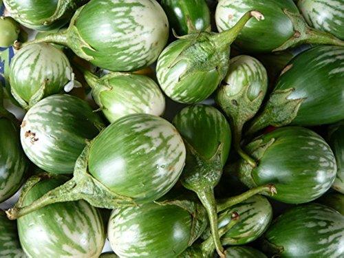 (Green & White Thai Kermit Eggplants 20)