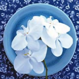 Grace Painter 5D Diamond Painting by Number Kit Diamond Painting White Flower Full Drill Canvas Wall Decor Craft Art Paint for Decor, 11.8 x 11.8 Inches