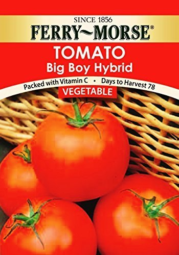 Ferry Morse Big Boy Tomato Seed Packet by Ferry (Ferry Morse Tomato Seed)