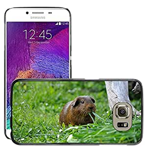 Super Stella Slim PC Hard Case Cover Skin Armor Shell Protection // M00148688 Guinea Pig Rodent Animal Eat Hungry // Samsung Galaxy S6 (Not Fits S6 EDGE)