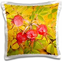 Danita Delimont - Flora - Washington, Fall-colored Rose Hips flora - US48 SWS0079 - Stuart Westmorland - 16x16 inch Pillow Case (pc_96843_1)