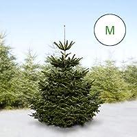 Gutshoftanne Echte frische Nordmanntanne, echter, frischer Weihnachtsbaum