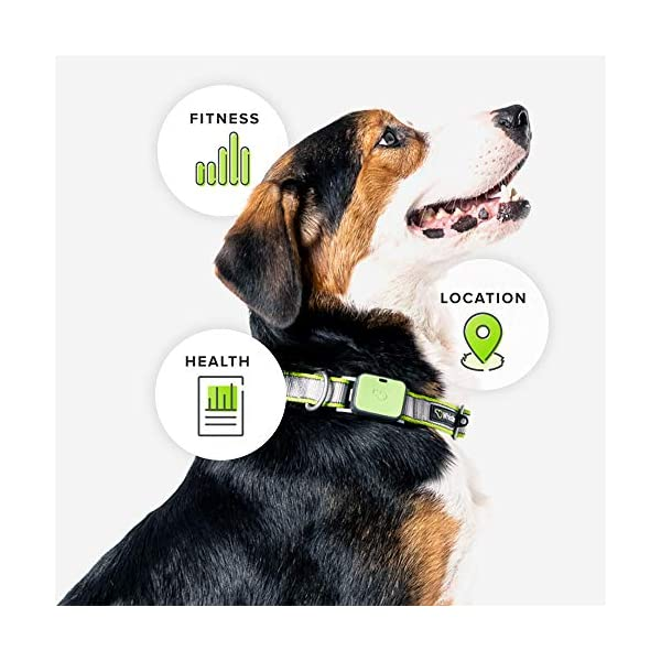 Whistle Go Explore - Ultimate Health & Location Tracker for Pets - Waterproof GPS Pet Tracker, Built-in Night Light, 20… 3