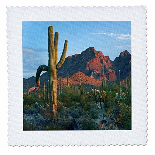 3dRose Danita Delimont - Deserts - Desert landscape at sunset. Ajo Mountains, Arizona - 20x20 inch quilt square (qs 258775 8)