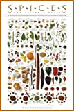 Spices and Culinary Herbs Collections Art Poster Print, 24x36