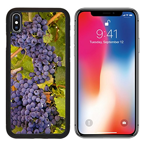 MSD Premium Apple iPhone X Aluminum Backplate Bumper Snap Case IMAGE ID: 27872390 Wine Grapes Ripening on the Vine - Edge Napa Valley Cabernet