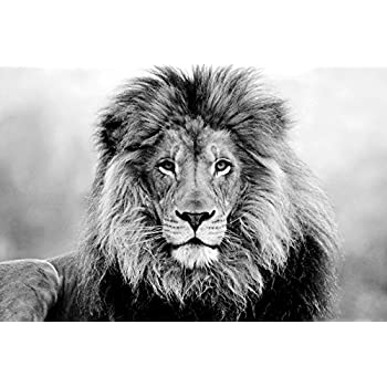 Face eyes lion fur mane animal art print on canvas rolled wall poster print