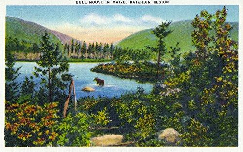 Katahdin Cabin - Maine - View of a Bull Moose in the Katahdin Region (36x54 Giclee Gallery Print, Wall Decor Travel Poster)