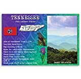 TENNESSEE STATE FACTS postcard set of 20 identical postcards. Post cards with TN facts and state symbols. Made in USA.