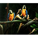 Canvas Prints Of Oil Painting ' Parrots ' , 12 x 14 inch / 30 x 37 cm , High Quality Polyster Canvas Is For Gifts And Basement, Bath Room And Hallway Decoration, home
