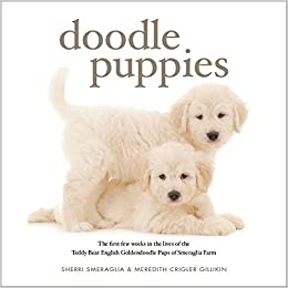 Doodle Puppies The First Few Weeks in the Lives of the Teddy