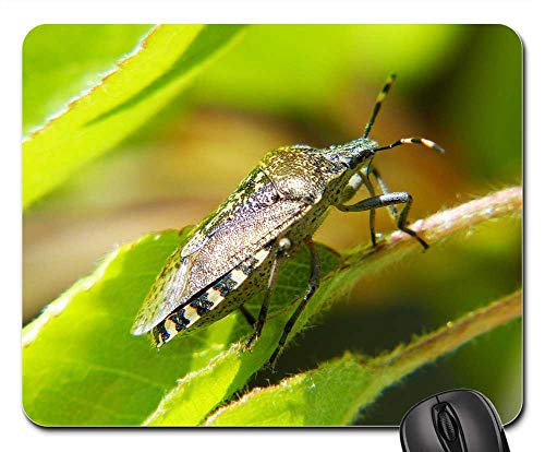 - Mouse Pads - Shield Bug Bug Insect Macro Photo Spotted Garden