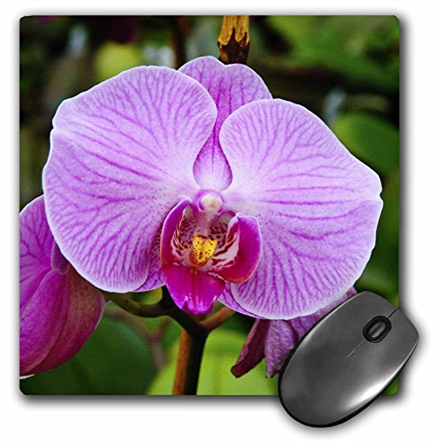 3dRose LLC 8 X 8 X 0.25 Inches Palm Springs, California. Orchids Michael Defreitas Mouse Pad (mp_88524_1)
