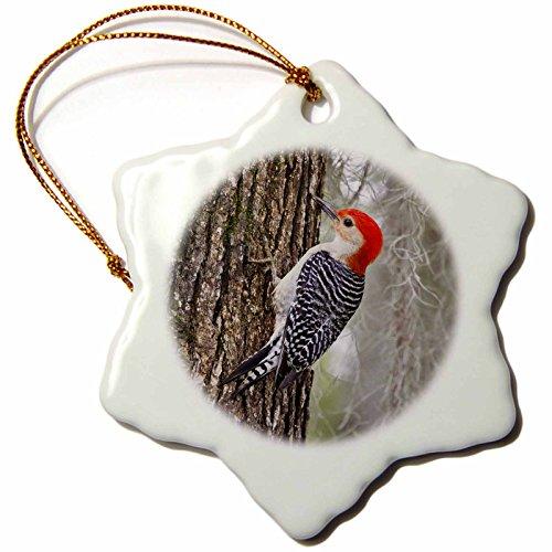 (3dRose Danita Delimont - Birds - Red-bellied Woodpecker bird, male on Oak Tree - US44 LDI0528 - Larry Ditto - 3 inch Snowflake Porcelain Ornament (orn_146668_1))
