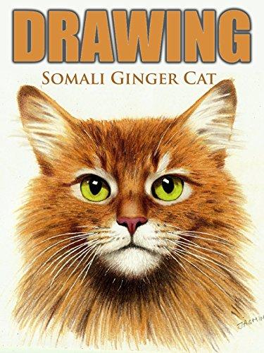 Clip: Drawing Somali Ginger Cat