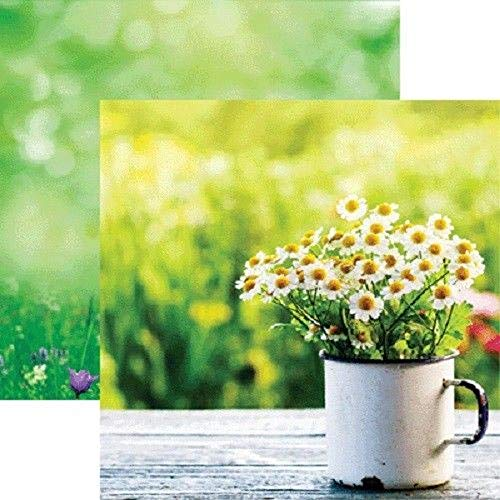 (2 Sheet Scrapbooking Crafts 12x12 Paper DS Hello Spring Cup Daisies Vintage Table Grass Decorative Craft Paper)