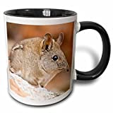 3dRose mug_76285_4 ''Cape Elephant Shrew, Bushmans Kloof, South Africa-AF42 RBE0003 - Ralph H. Bendjebar'' Two Tone Black Mug, 11 oz, Multicolor