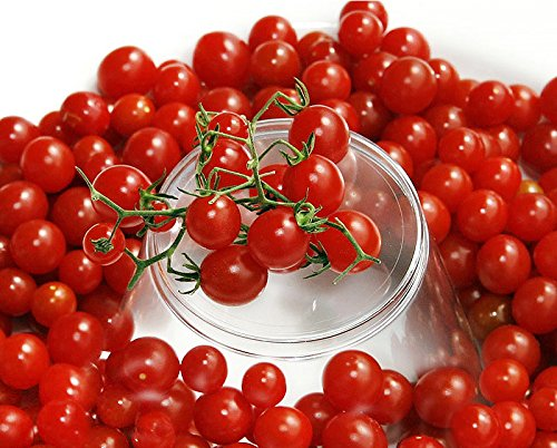 30+ ORGANICALLY Grown Sweet Pea Currant Tomato Seeds, Heirloom Non-GMO, Extra Sweet and Heavy-Yielding, Low Acid, Indeterminate, Open-Pollinated, Long Season, Super Delicious, from USA (Best Sweet Pea Seeds)