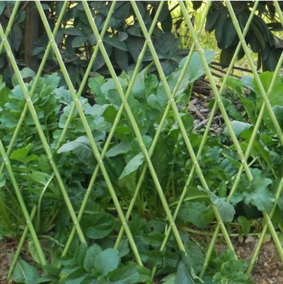 - EcoTrellis Flexible Fence, Bamboo Fence, Bamboo Sticks,Plastic Coated Fence for Garden, Yard,Supporting