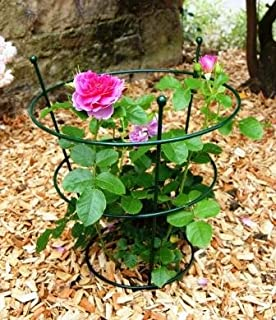 Many Heights Available Strong Metal Garden Supports Hydrangea etc Roses 55cm High - 35cm Wide Bow Plant Supports for Peonies Semicircular Stakes Pack of 2