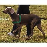 PetSafe Easy Walk Dog Harness, Petite, Green