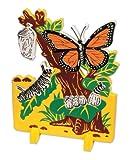 Book Plus Butterfly Life Cycle Foam Model, 10'' x 14.5'' x 0.75'' Size