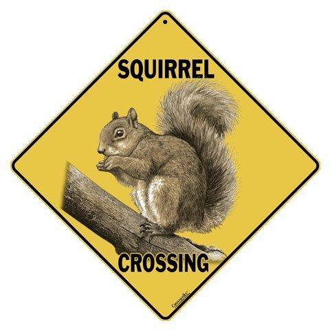 CROSSWALKS Squirrel Crossing 12