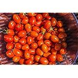 Mexikanische Honigtomate/(Miel du Mexique)/40 Samen/sehr süß/sehr ertragreich/pflegeleicht