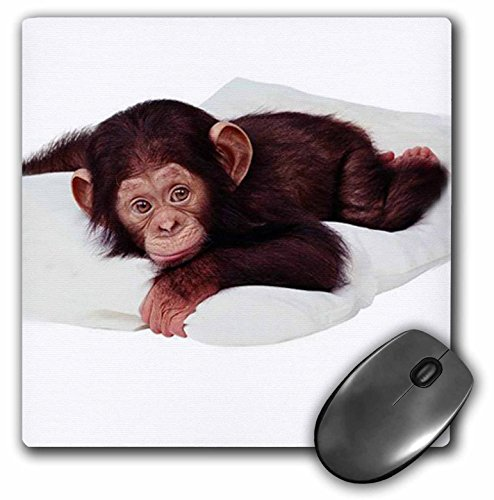 3dRose LLC 8 x 8 x 0.25 Inches Mouse Pad, Cute Chimpanzee (mp_628_1)