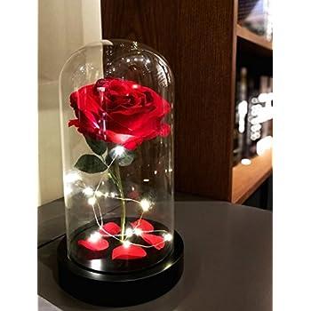 Amazon Beauty And The Beast Enchanted Rose Defaith 13 X 67