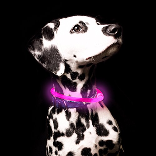 - GlowCity Light Up LED Fiber Optic Dog Neckalace - Pink