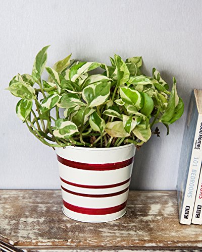 Store Indya, Decorative Metal Planter for Home Indoor & Outdoor Garden Standing Planters (Red & White) (Halloween Vegetable Trays Ideas)